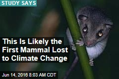 This Is Likely the First Mammal Lost to Climate Change