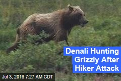 Denali Hunting Grizzly After Hiker Attack
