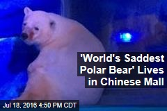 'World's Saddest Polar Bear' Lives in Chinese Mall