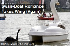 Swan-Boat Romance Takes Wing (Again)
