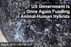US Government Is Once Again Funding Animal-Human Hybrids
