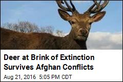 Deer at Brink of Extinction Survives Afghan Conflicts
