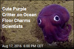 Cute Purple Critter on Ocean Floor Charms Scientists