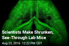 Scientists Make Shrunken, See-Through Lab Mice