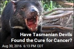 Tasmanian Devil May Be Evolving to Fight Cancer