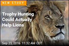 Trophy Hunting Could Actually Help Lions