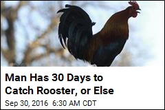 Man has 30 Days to Catch Rooster, Or Else