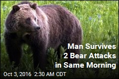 Grizzly Attacks Same Man Twice