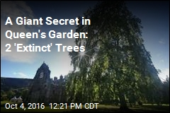 A Giant Secret in Queen's Garden: 2 'Extinct' Trees