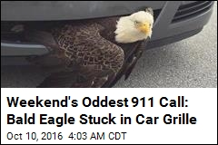 Bizarre Post-Hurricane Rescue: Bald Eagle Stuck in Car Grille