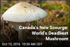Canada's New Scourge: World's Deadliest Mushroom