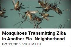 Mosquitoes Transmitting Zika in Another Fla. Neighborhood