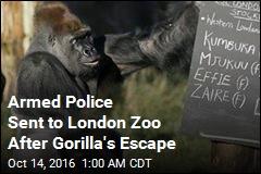 London Zoo Recaptures Escaped Gorilla