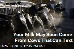 Your Milk May Soon Come From Cows With Embedded Sensors