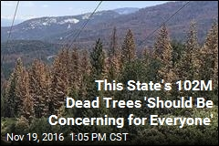 California Now Home to 102M Dead Trees
