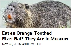 Eat an Orange-Toothed River Rat? They Are in Moscow