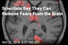 Scientists Say They Can Remove Fears From the Brain