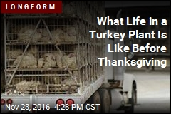 What Life in a Turkey Plant Is Like Before Thanksgiving