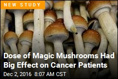 Dose of Magic Mushrooms Had Big Effect on Cancer Patients