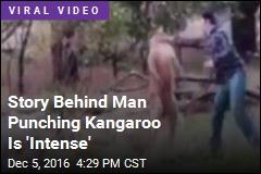 Story Behind Man Punching Kangaroo Is 'Intense'