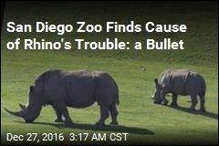 San Diego Zoo Finds Poacher's Bullet in Rhino
