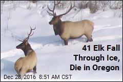 41 Elk Fall Through Ice, Die in Oregon