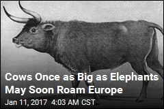 Cows as Big as Elephants May Soon Roam Europe