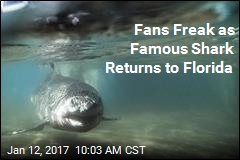 Fans Freak as Famous Shark Returns to Florida
