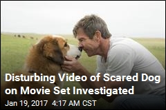 Disturbing Video of Scared Dog On Movie Set Investigated