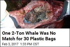Beached Whale Had a Tummy Full of Plastic Bags: Scientists