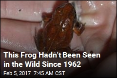 A Frog Feared Extinct Just Turned Up