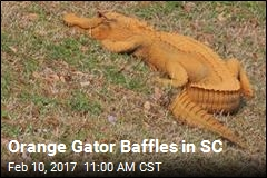 Orange Gator Baffles in SC