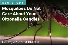 Mosquitoes Do Not Care About Your Citronella Candles