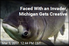 Faced With an Invader, Michigan Gets Creative