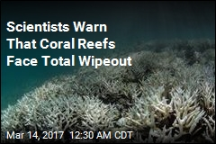 Scientists Warn That Coral Reefs Face Total Wipeout