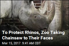 To Protect Rhinos, Zoo Taking Chainsaw to Their Faces