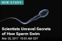 Scientists Unravel Secrets of How Sperm Swim