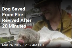 Dog Saved From Fire Revived After 20 Minutes