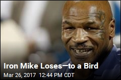 Iron Mike Loses—to a Bird