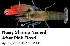 Noisy Shrimp Named After Pink Floyd