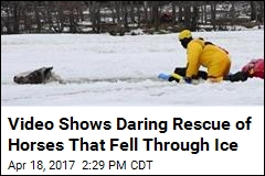 'Wild Broncing' Horses Rescued After Falling Through Ice