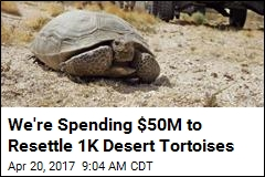 An Unusual Mission for the Marines: Move Tortoises