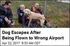 Dog Escapes After Being Flown to Wrong Airport