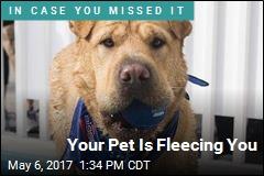 Your Pet Is Fleecing You