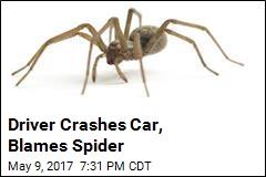 Driver: Spider Made Me Crash My Car