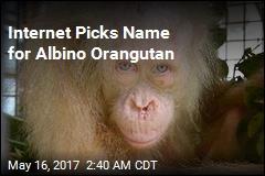 Internet Picks Name for Albino Orangutan