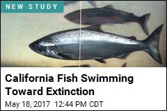 California Fish Swimming Toward Extinction