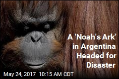 A Year After Argentine Zoo's Closing, Animals Still in Limbo