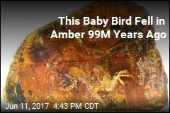 Baby Bird May Help Us Understand Life 99M Years Ago