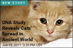 DNA Study Reveals Cats' Spread in Ancient World